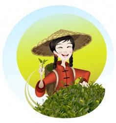 Tea leaf harvesting vector