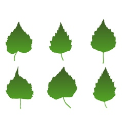 Birch leaves vector image