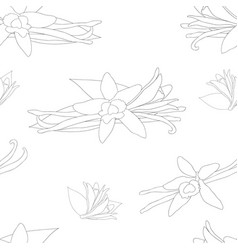 vanilla planifolia flower on white background vector image