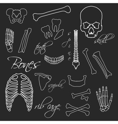Human bones white outline symbols on blackboard vector