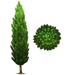 A swedish columnar plant vector