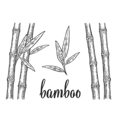 Bamboo trees with leaf white silhouettes and black vector