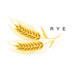 Rye ear infographic with realistic vector