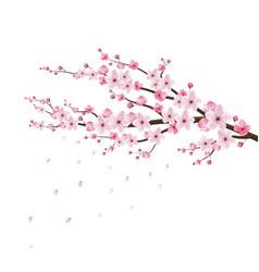 cherry blossom realistic sakurajapan vector image