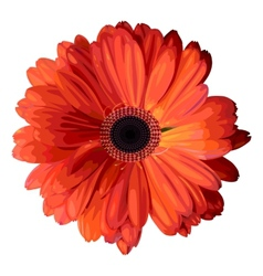 Orange gerbera vector