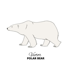 Polar bear hand drawn vector