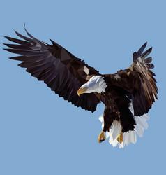 Condor vector
