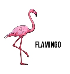 Hand drawn pink flamingo colorful sketch style vector