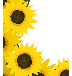 Sunflowers corner vector