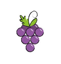 Delicious and healthy grape fruit vector