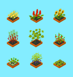 plant seedling isometric view vector image vector image