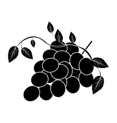 grapes bunch icon image vector image