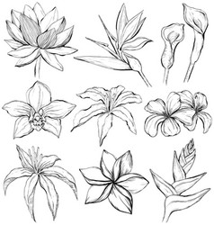 Tropical flowers - sketch style vector