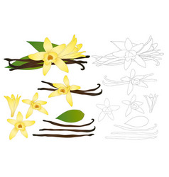 vanilla planifolia flower outline vector image