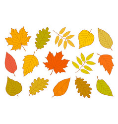 hand drawn set of isolated autumn leaves vector image