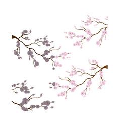 sakura japanese plant icon vector image vector image