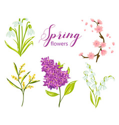 spring flower set with lilac lily snowdrop vector image