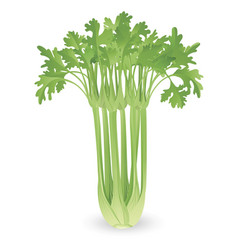 Bunch of celery vector