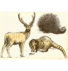Echidna deer and procyonidae raccoon vector