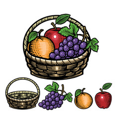 Hand drawing style of fruits in the basket vector