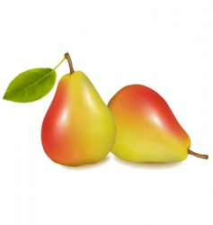 two pears vector image