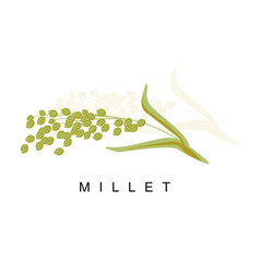 Millet ear infographic with vector
