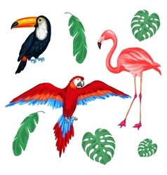 Set of tropical birds and palm leaves vector