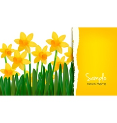 Daffodil card vector