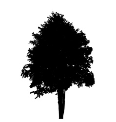 Tree silhouette isolated on white background vector