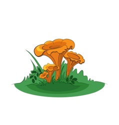 Group of chanterelle mushrooms vector