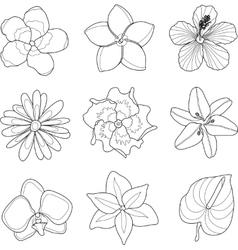 tropical flowers set vector image
