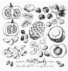 Ink drawn nuts ans seeds vector