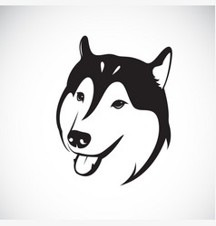Dog siberian husky on white background pet vector
