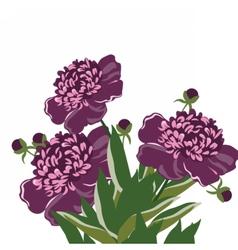 Vintage Watercolor peony flowers vector image