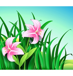 A garden at the hill with two blooming pink vector image vector image