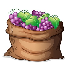 A sack of grapes vector image vector image