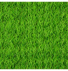 Seamless pattern of green grass vector image