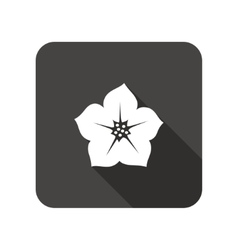Petunia flower icons floral symbol vector
