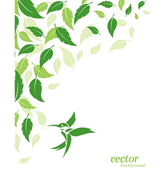 Abstract green leaves and hummingbirds background vector