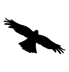 Eagle on white background vector