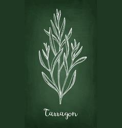 Tarragon chalk sketch vector