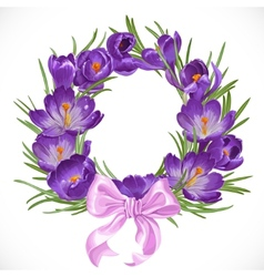 Wreath of purple crocus with pink ribbon vector