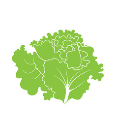 Leaf salad vector