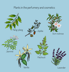 plants in the perfumery and cosmetic vector image