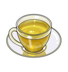 hand drawn glass cup mug of green tea drink vector image