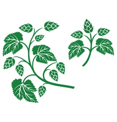 Hops leaf design vector