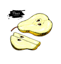 Pear drawing isolated hand drawn pear and vector