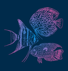 Graphic aquarium fishes set vector