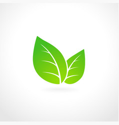 Green leaf ecology emblem vector image