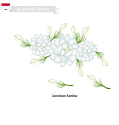 Jasminum Sambac The National Flower of Indonesia vector image